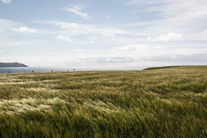 growing barley by the sea at Coull Farm