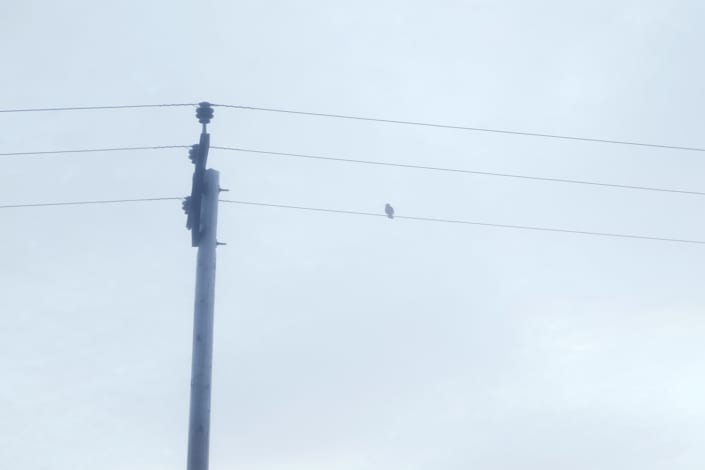 listen bird on the wire