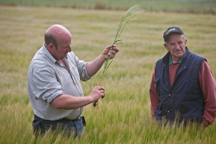 Craig and Tony Archibald - Tillering in Islay barley