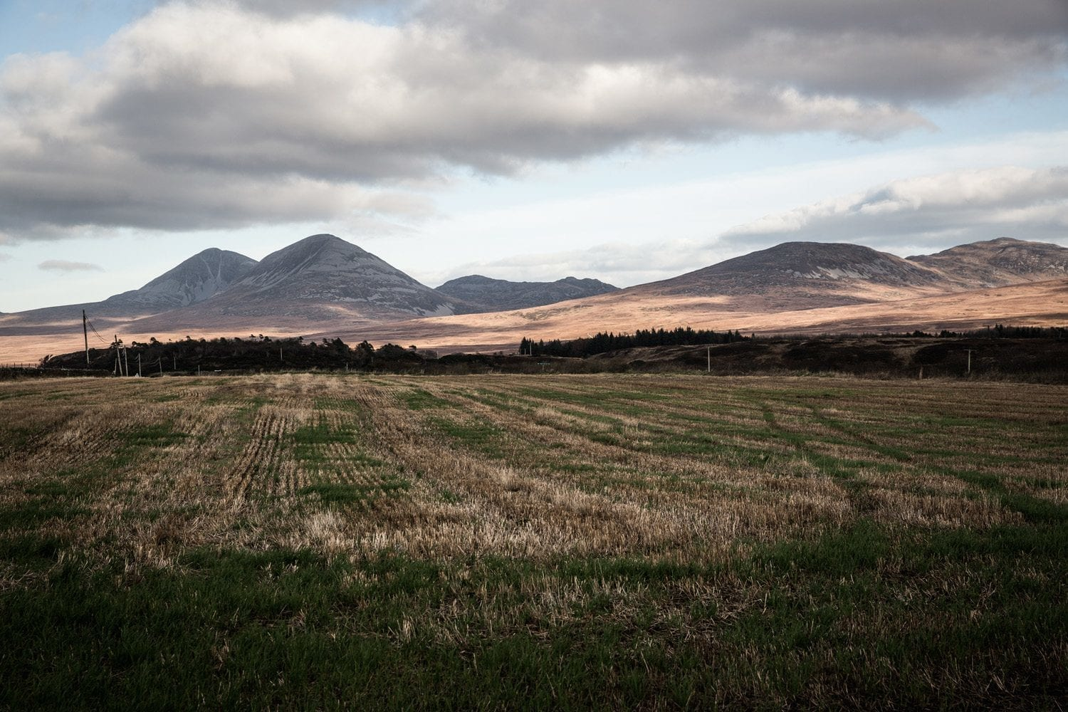 Barley field, Dunlossit Estate, Islay - We Believe Terroir Matters.